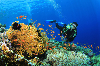 Scuba Diver explores a coral reef in the Red Sea - monte mare