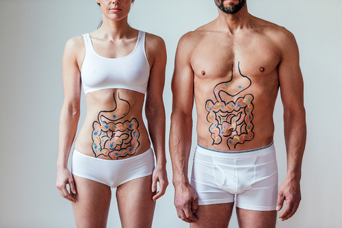 Male and Female Intestinal Health Concept - monte mare